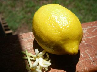 パパイヤの花 with レモン